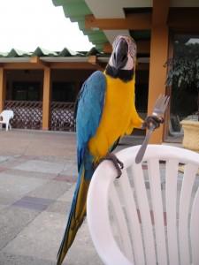 even a parrot needs a fork!